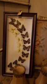 Vlinderkastje