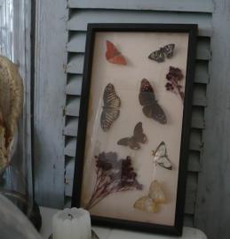 Brocante vlinderkastje VERKOCHT