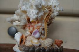 Oud koraal en opgezet zeepaardje