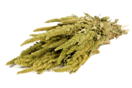 Gedroogde Amaranthus, green naturel