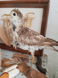 Opgezette vogel