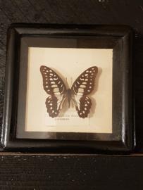 Oud vlinderkastje