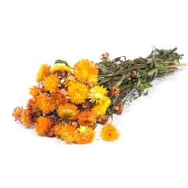 Helichrysum / Strobloemen orange