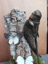 Opgezette zwaluw met vlinders onder stolp
