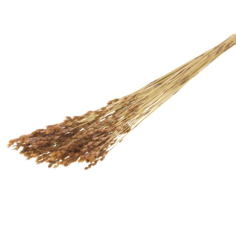 Thatch riet naturel 15st