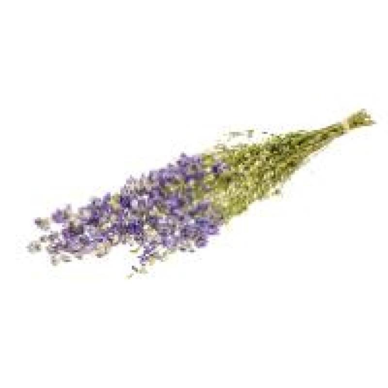 Delphinium lilac