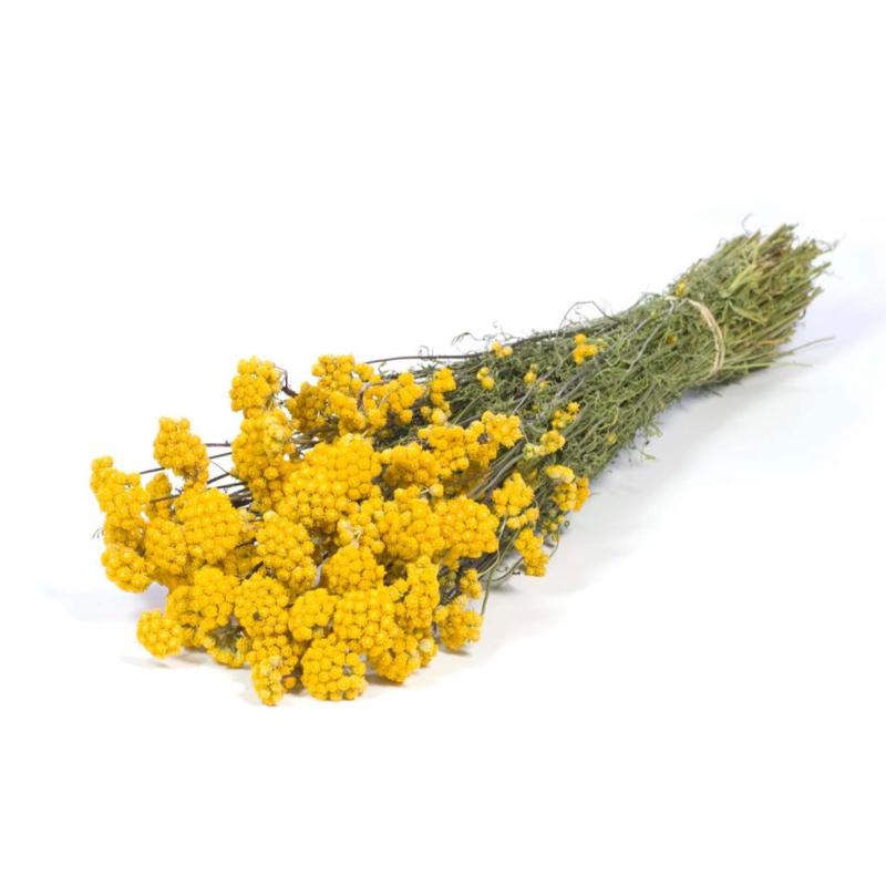 Lona yellow natural
