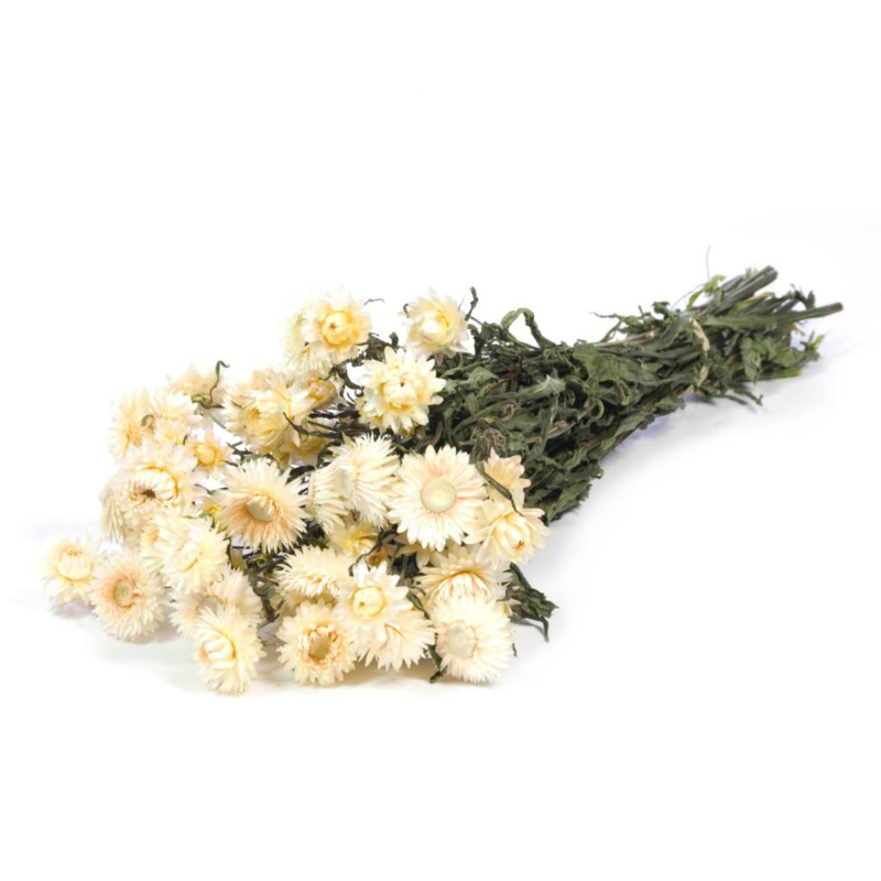 Gedroogde Helichrysum, naturel white