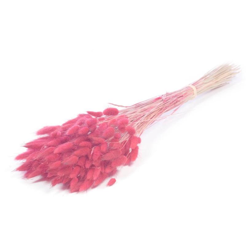 Lagures pink