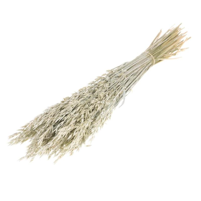 Haver (Avena) White misty