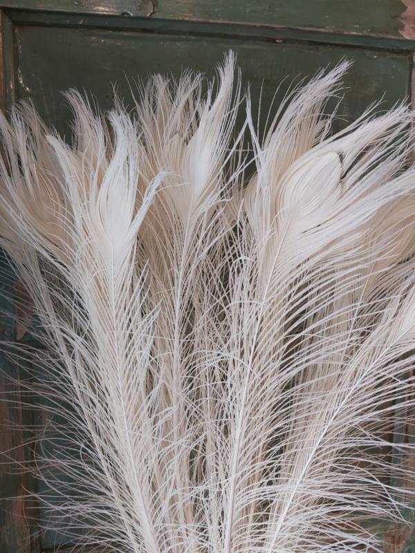 Pauwen veren 5st bleach
