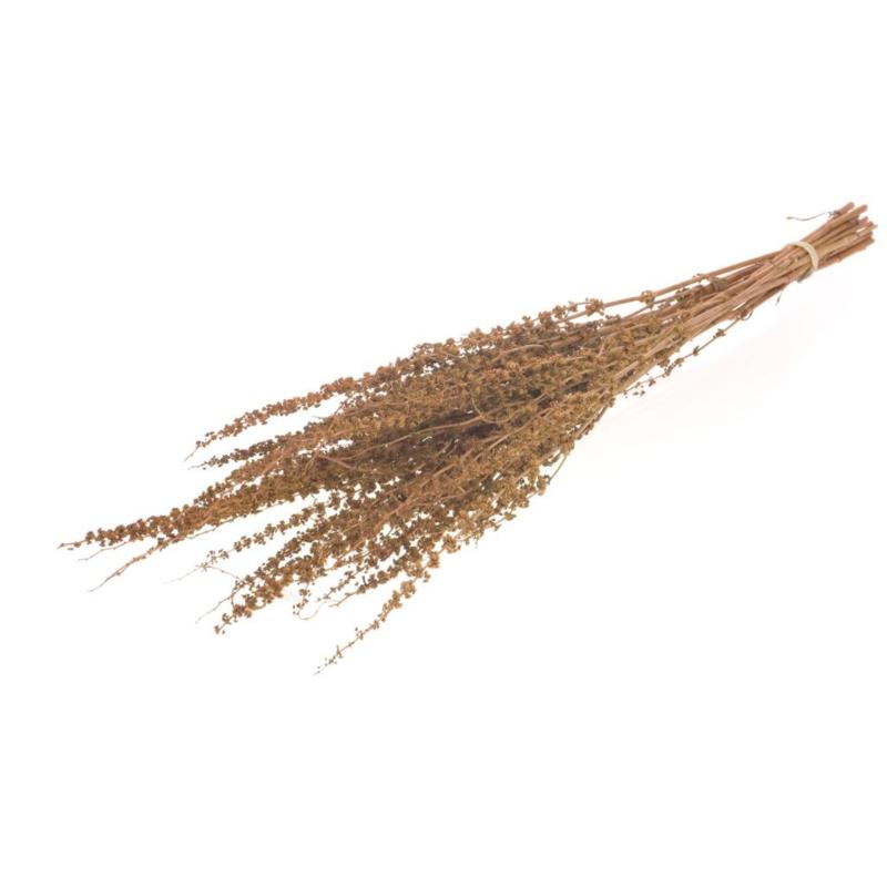 Palak stick naturel