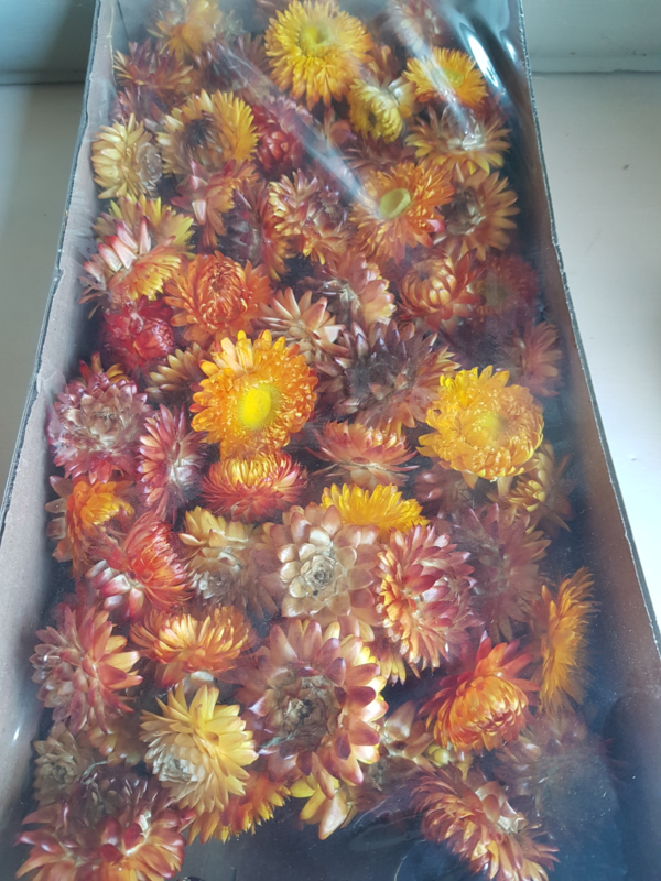 Helichrysum, Orange heads
