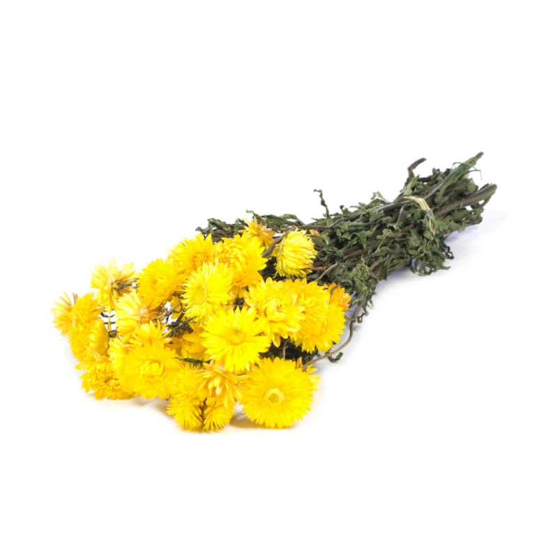 Helichrysum  / Strobloem yellow