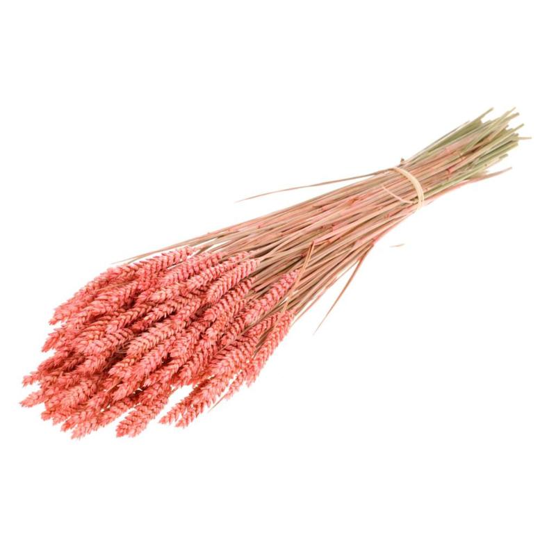 Tarwe Pink