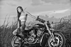 Harley's V-Rod Girls