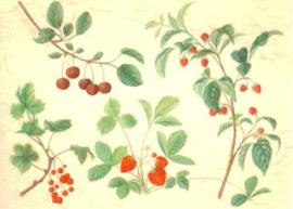 Anna Lübsee - Rood fruit