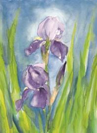 Marjan van Zeyl - Ansichtkaart Iris Germanica