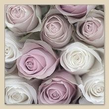 Servet Mixed roses, 33x33 cm, nr. 80014