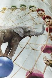 Beddinghouse kids dekbedovertrek Circus  1 persoons kleur multi