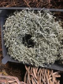 Prachtige set van 2 vergrijsde krans asparagus wax in houten kratje waxed 25 cm landelijk stoer sober grijze grijs