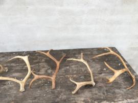 Afwerpstang afworpstang rendier gewei hoorn hert damhert ree decoratie landelijk brocant