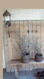 Koperen buitenlamp lantaarn stallamp tierlantijn wandlamp Bogera incl glazen stolp