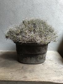 Grote gedroogde takkenbos iron 50-70 cm Bush struik landelijk gedroogd naturel