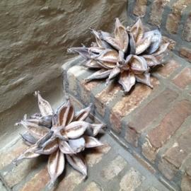 Gedroogde decoratie bloem  landelijk sober vergrijsd grijs