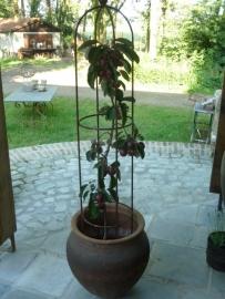 Smeedijzeren ornament  obelisk klimplant 100 cm