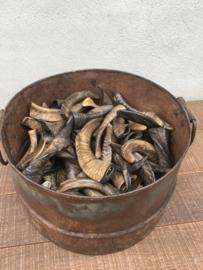 mini kleine hoorn hoorntjes beige bruin zwart grijs