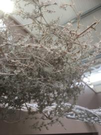 Grote Bundel aspagarus vergrijsd gedroogde takkenbos iron Bush struik landelijk gedroogd naturel