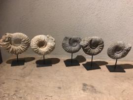 Eeuwenoude steen fossiel hardsteen ornament steen donkergrijs arduin zandsteen grijs schelp vorm op statief landelijk sober