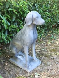 Groot grote grijze betonnen Dog pointer beeld hond tuinbeeld massief beton all weather 4 seizoenen vorstbestendig