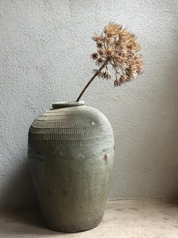 Prachtige sobere Decoratietak berenklauw kunst decoratie tak bloem