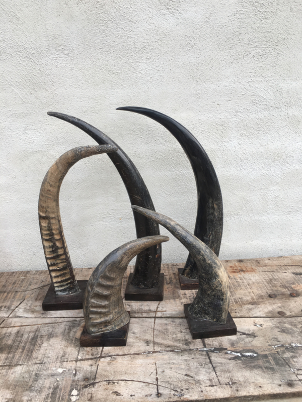 Grote zwart grijs zwarte grijze hoorn 35 cm op voet staand ornament