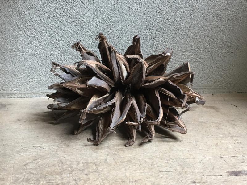 """Gedroogde decoratie """"bloem"""" landelijk sober naturel bruin bloem tak"""