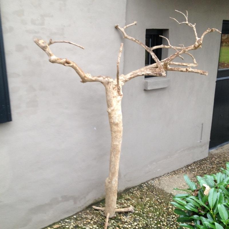Grote gedroogde koffieboom coffee tree decoratie boom tak papegaaienboom papegaai vogel vogels decoratietak gebleekt