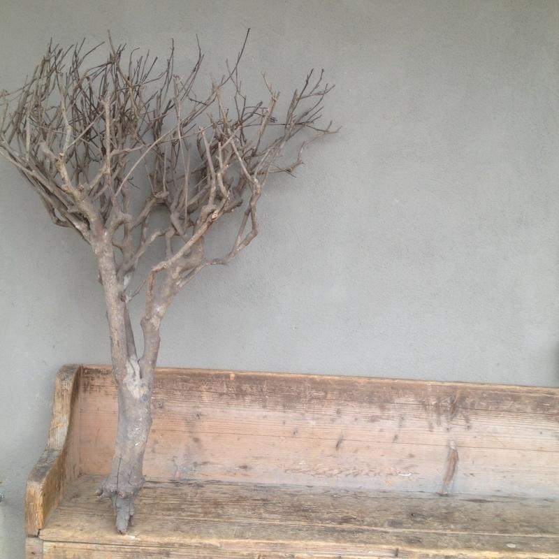 Grote vergrijsde tak decoratietak tea bush naturel