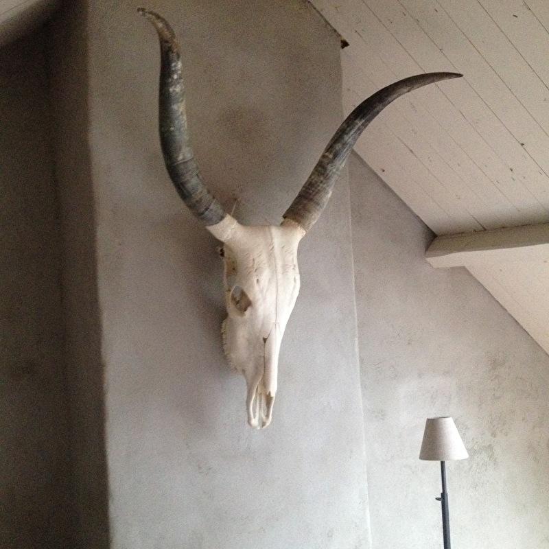 Groot gewei schedel buffel hoorns grijs landelijk stoer modern vintage wild opgezet