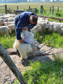 250 gram wol
