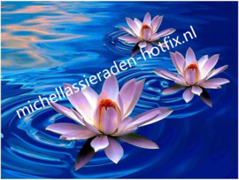 Lelies op het water 50x40 cm