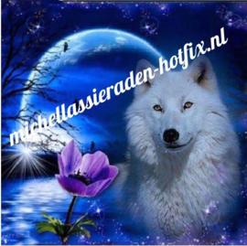 Wolf in Maneschijn 50x50 cm