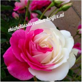 Wit-Rose Roos 40x40 cm