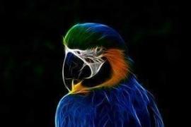 Papegaaienhoofd 60x40 cm