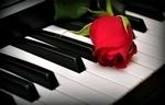 Roos op piano 55x35 cm