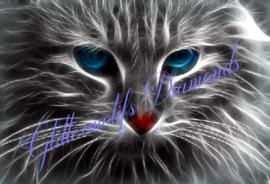 Poes met blauwe ogen 45x30 cm