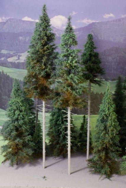 AD 8010-35 Dennen (hoogstam)