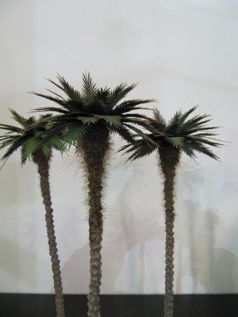 Palmboom, artikelnummer volgt nog