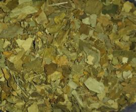 Moringa Oleifera thee